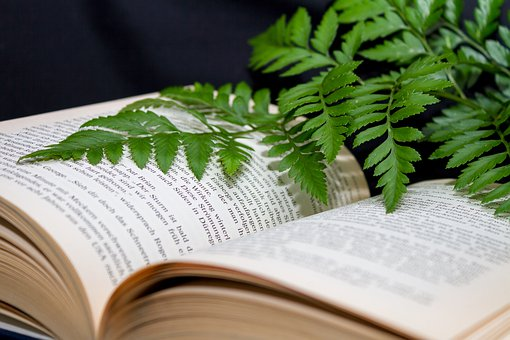 nurturing knowledge