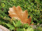 a leaf's tale