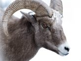 What do I need to know about qurbani?