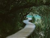 Should you follow a tariqa?
